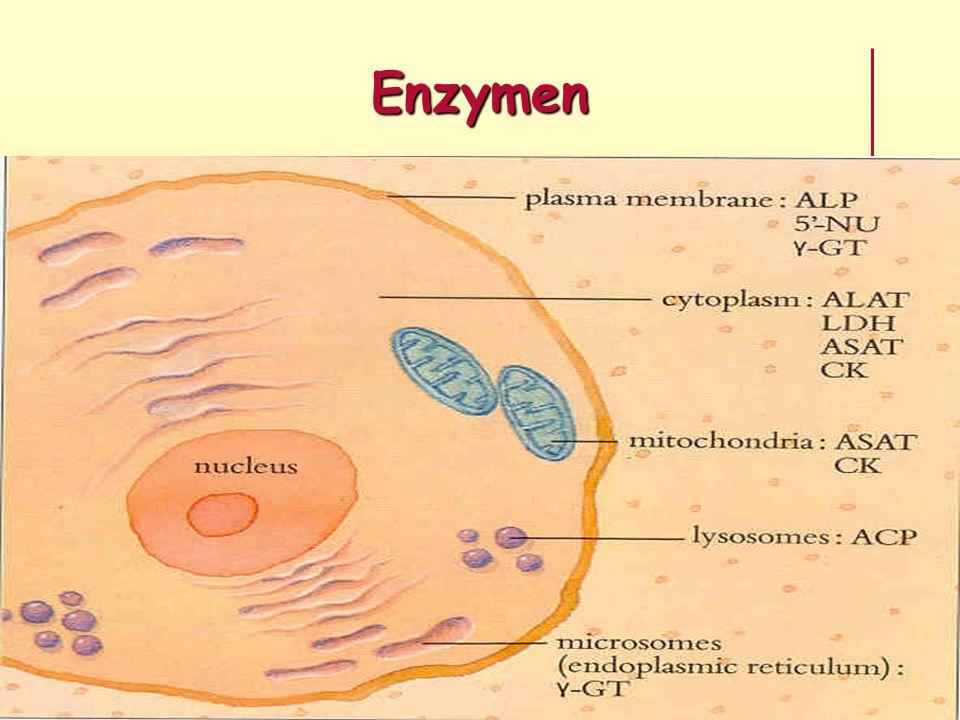 Enzymen