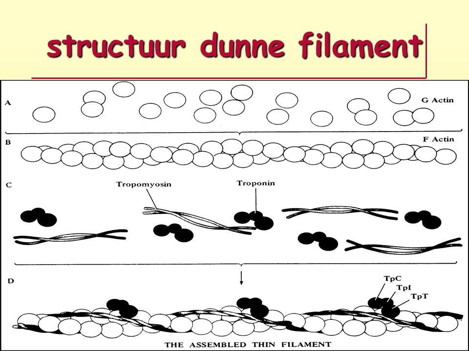 structuur dunne filament