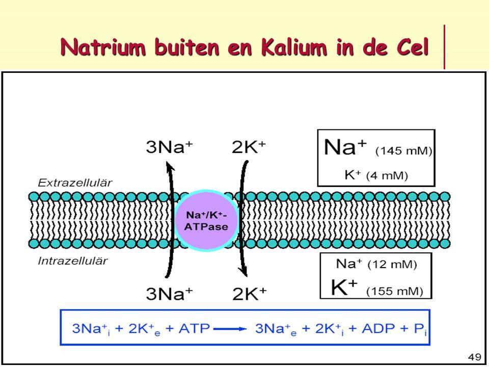 Natrium buiten en Kalium in de Cel