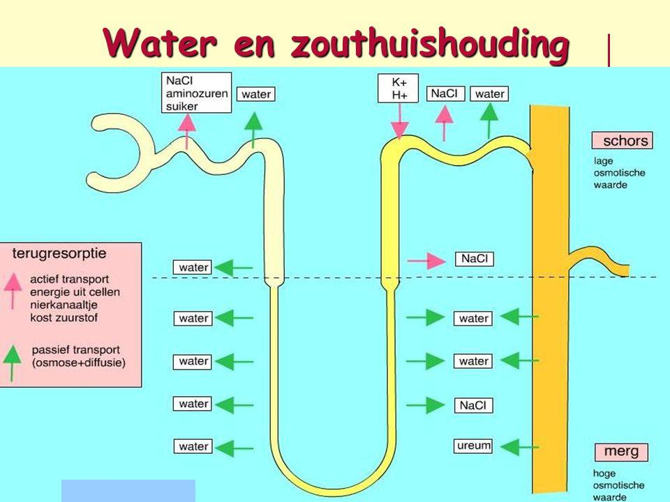 Water en zouthuishouding