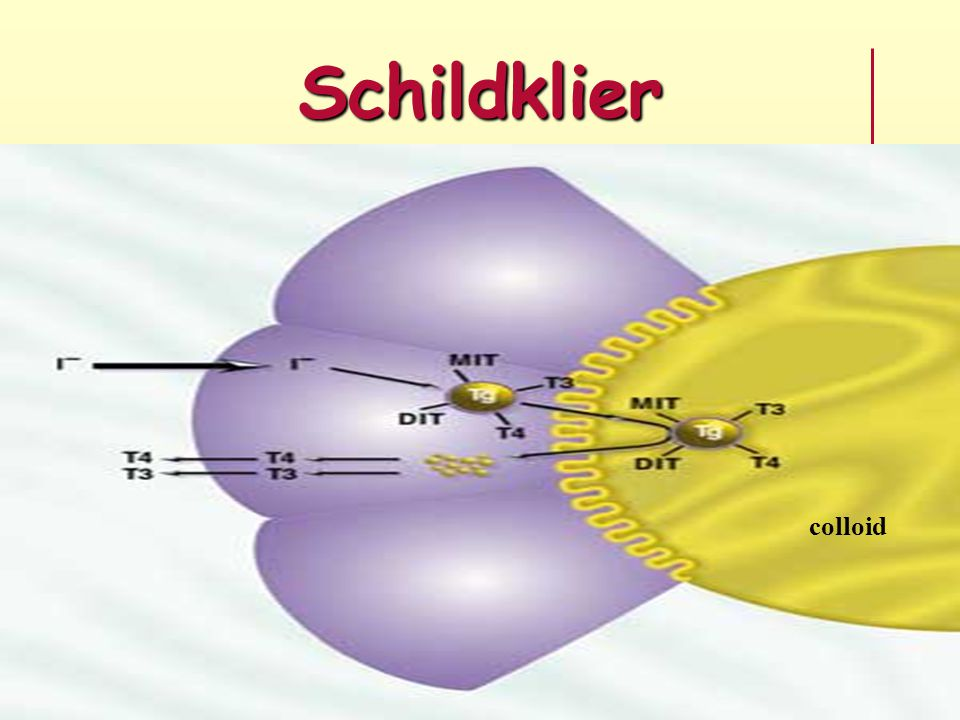 Schildklier colloid