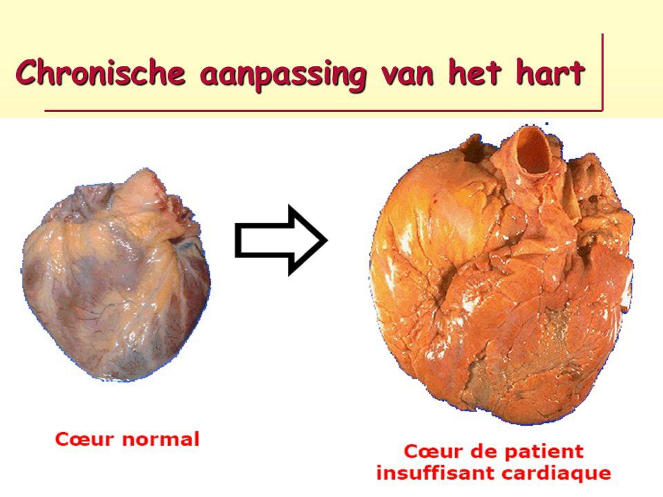 Chronische aanpassing van het hart