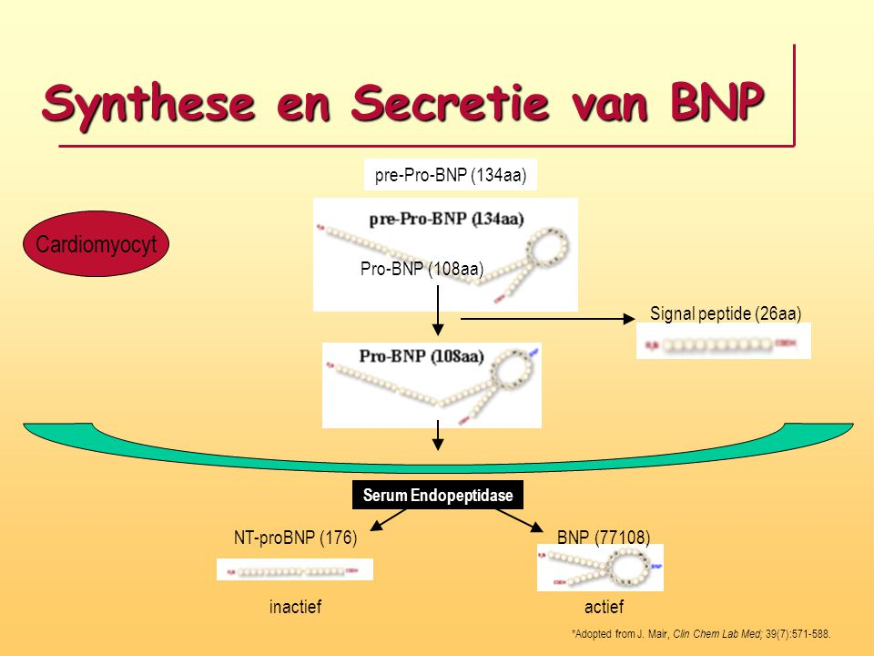 Synthese en Secretie van BNP