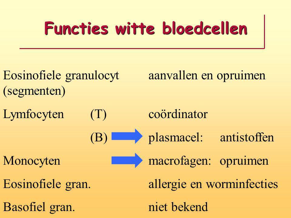 Functies witte bloedcellen