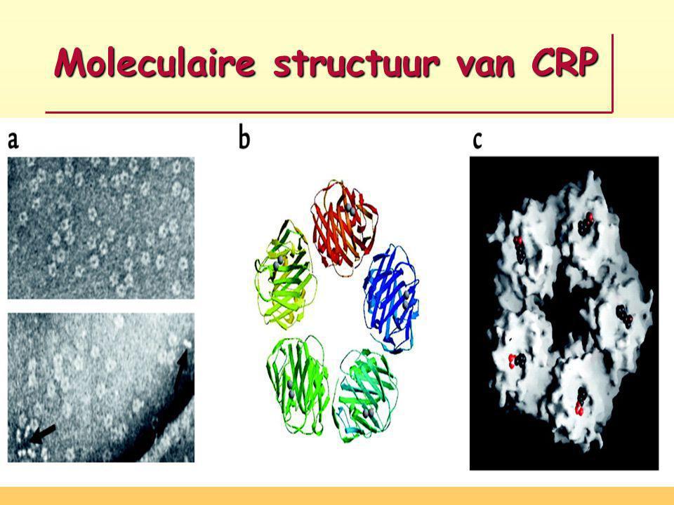 Moleculaire structuur van CRP