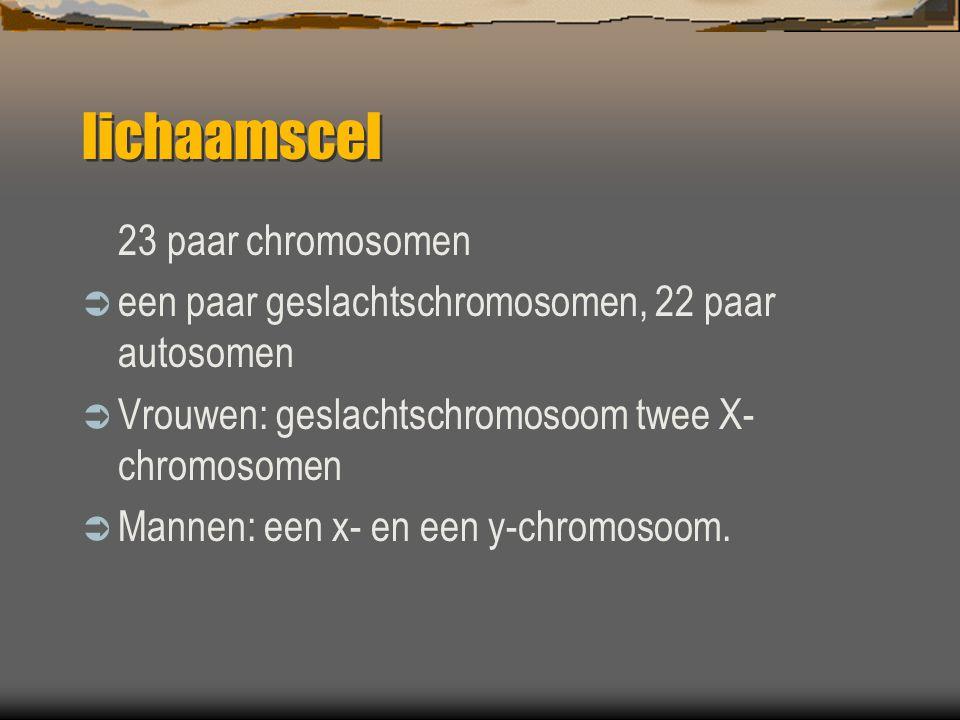 lichaamscel 23 paar chromosomen