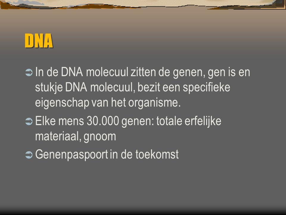 DNA In de DNA molecuul zitten de genen, gen is en stukje DNA molecuul, bezit een specifieke eigenschap van het organisme.