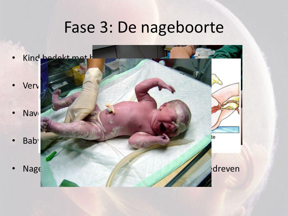 Fase 3: De nageboorte Kind bedekt met huidsmeer (bescherming)