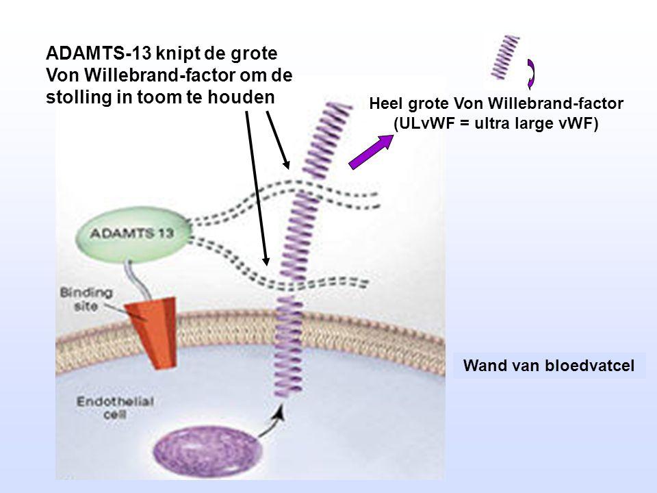 Heel grote Von Willebrand-factor (ULvWF = ultra large vWF)