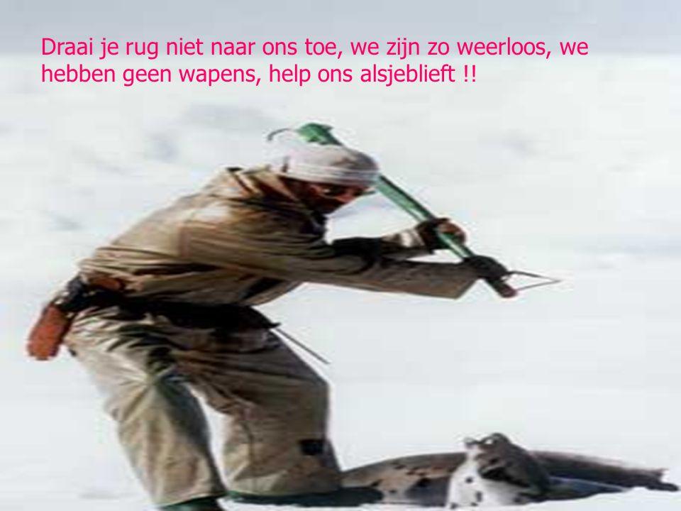 Draai je rug niet naar ons toe, we zijn zo weerloos, we hebben geen wapens, help ons alsjeblieft !!
