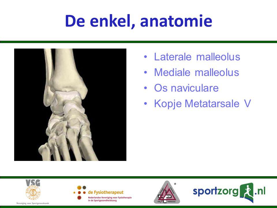 De enkel, anatomie Laterale malleolus Mediale malleolus Os naviculare
