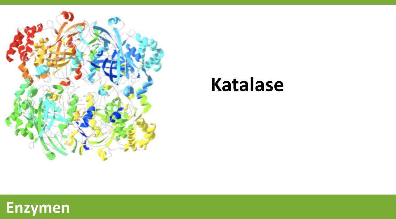 Katalase
