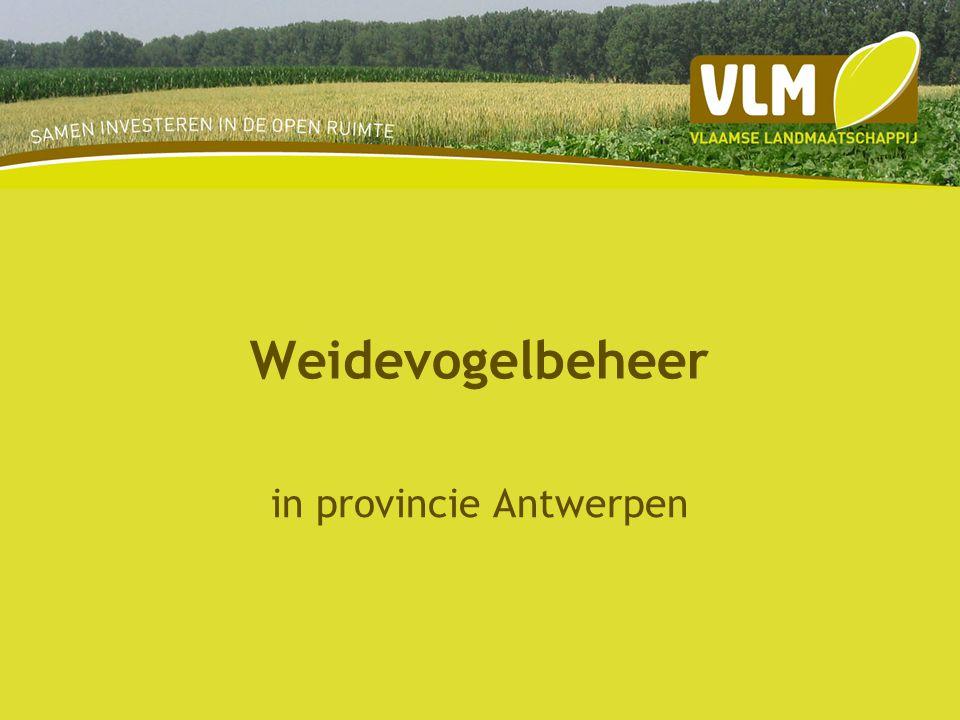 in provincie Antwerpen