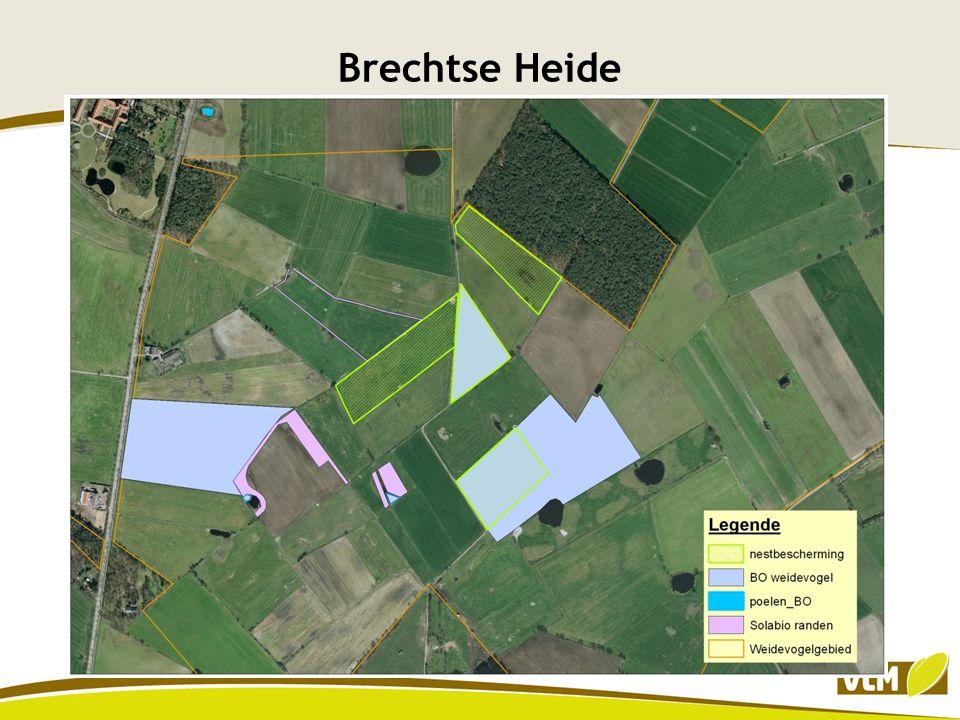 Brechtse Heide