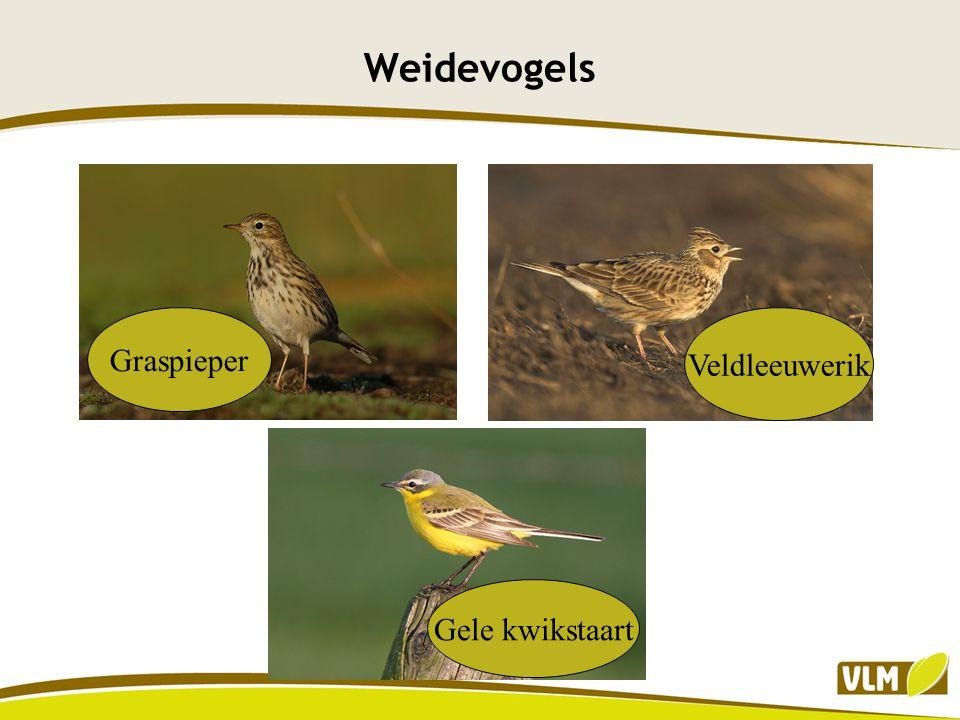 Weidevogels Graspieper Veldleeuwerik Gele kwikstaart