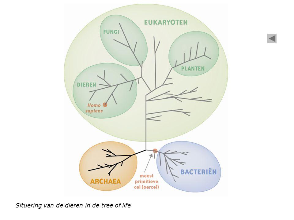 Situering van de dieren in de tree of life