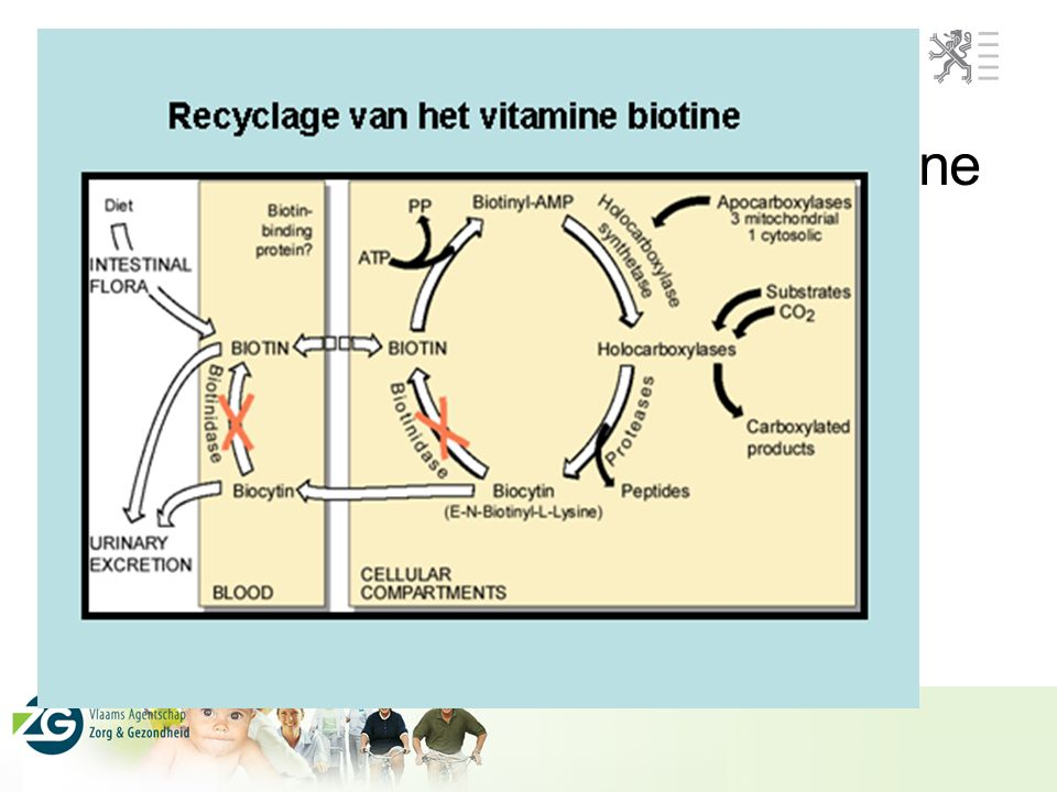 Recyclage van het vitamine biotine