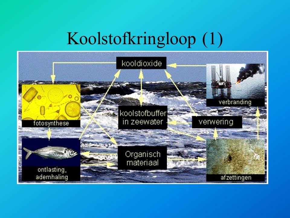 Koolstofkringloop (1)