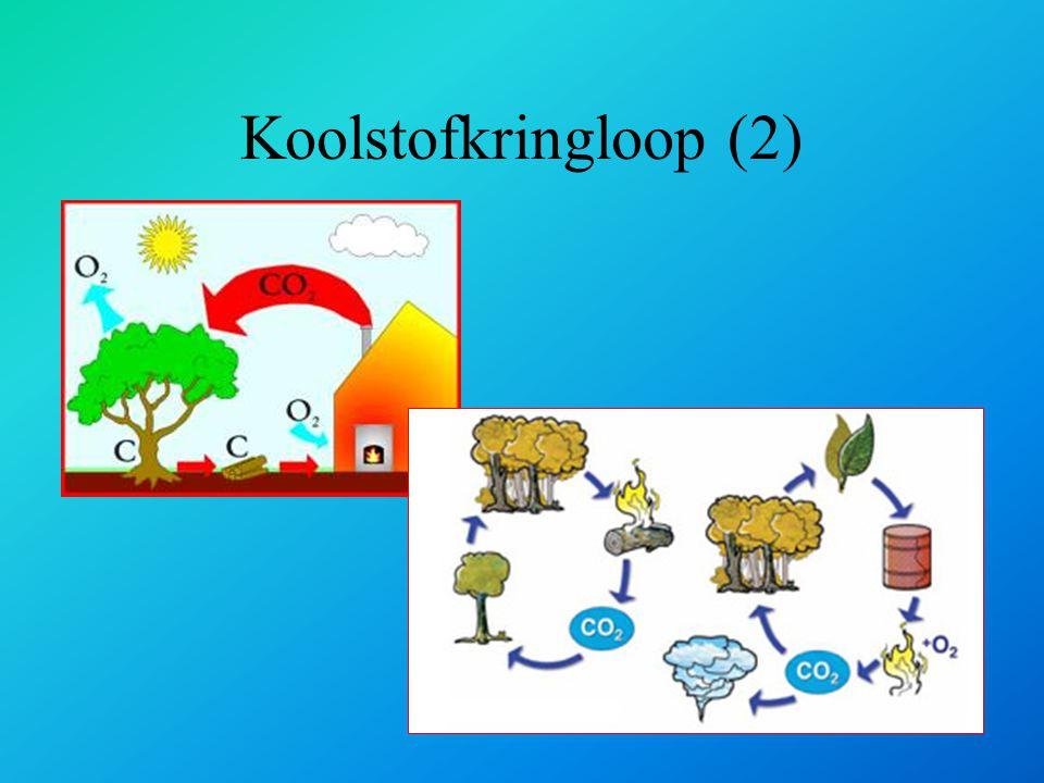 Koolstofkringloop (2)