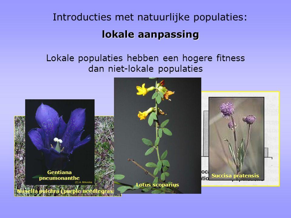 Gentiana pneumonanthe Nasella pulchra (purple needlegrass)