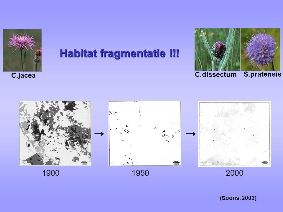 Habitat fragmentatie !!! 1900 1950 2000 S.pratensis C.jacea