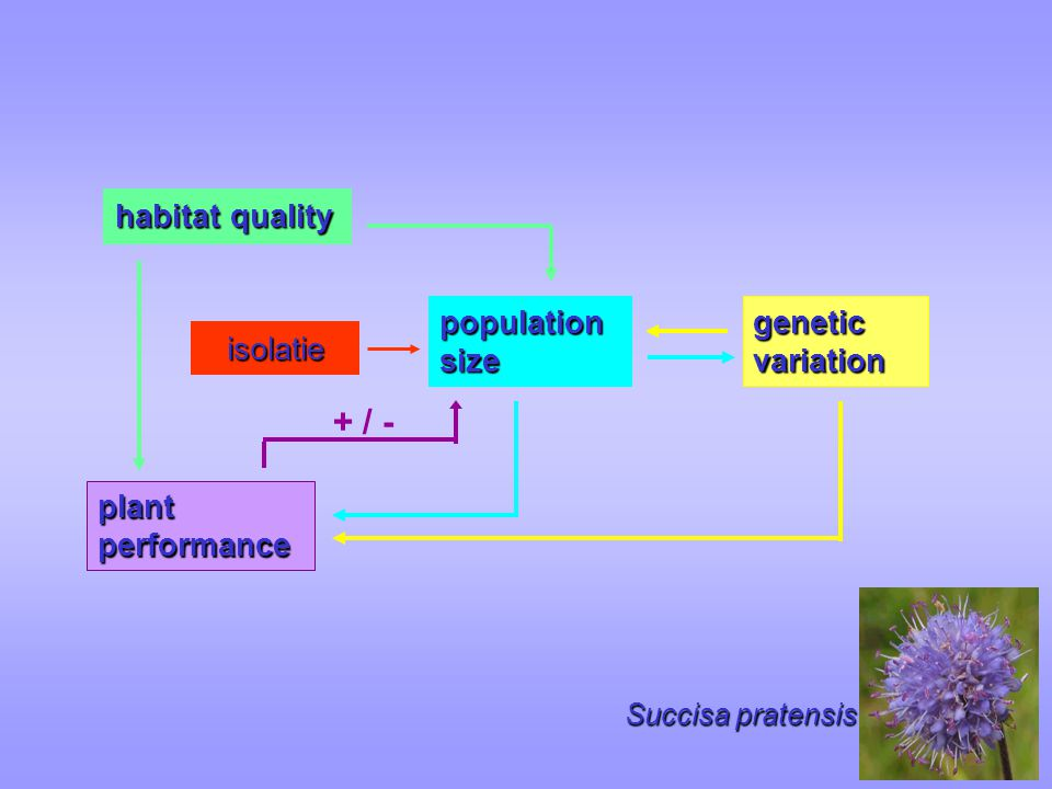 + / - population size habitat quality genetic variation