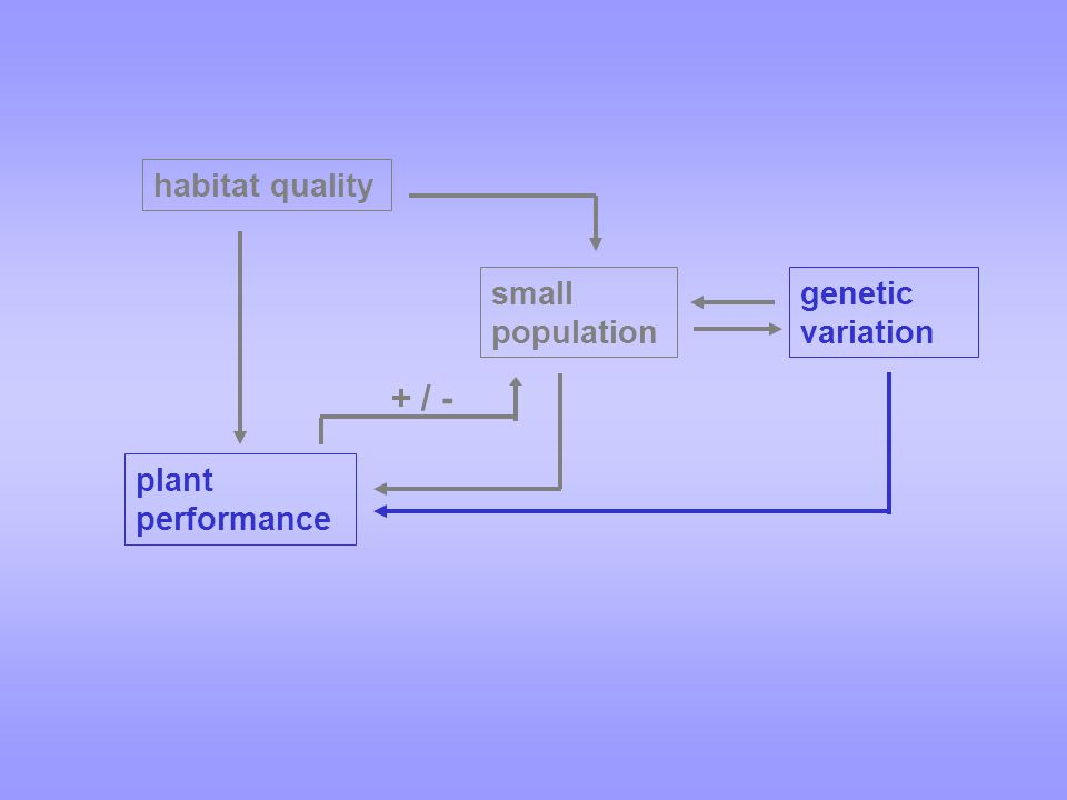 + / - small population habitat quality genetic variation