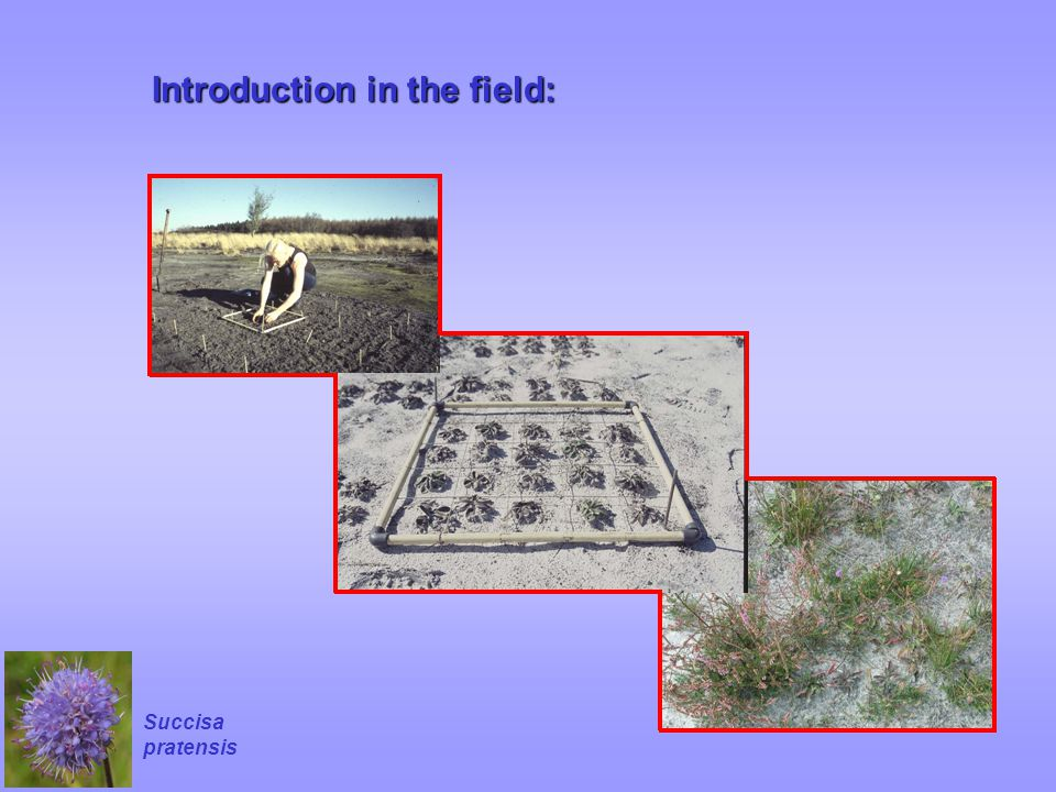 Introduction in the field: