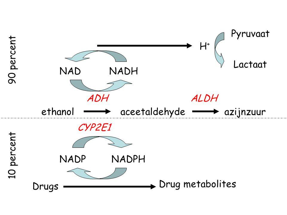 Pyruvaat H+ 90 percent. Lactaat. NAD. NADH. ADH. ALDH. ethanol. aceetaldehyde. azijnzuur. CYP2E1.