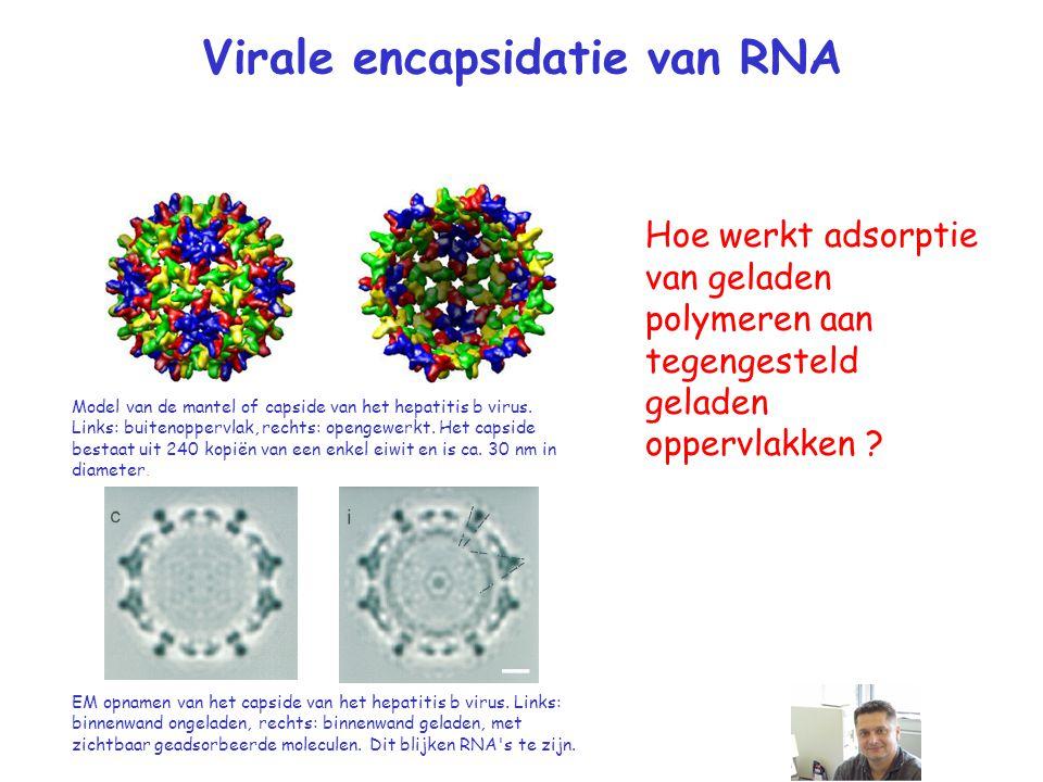 Virale encapsidatie van RNA