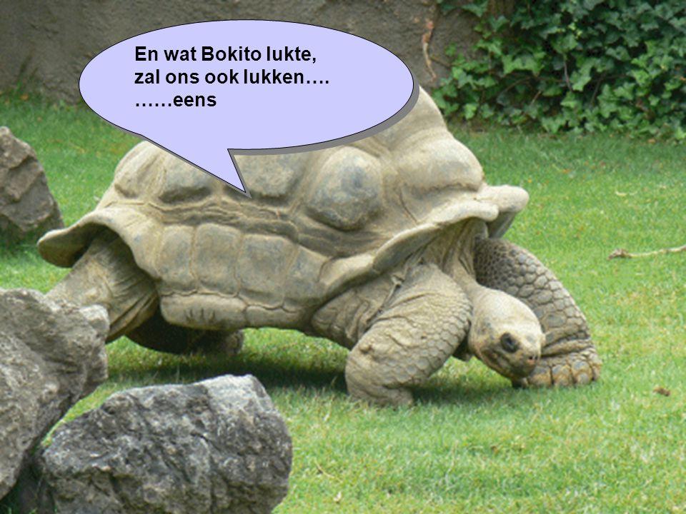 En wat Bokito lukte, zal ons ook lukken…. ……eens