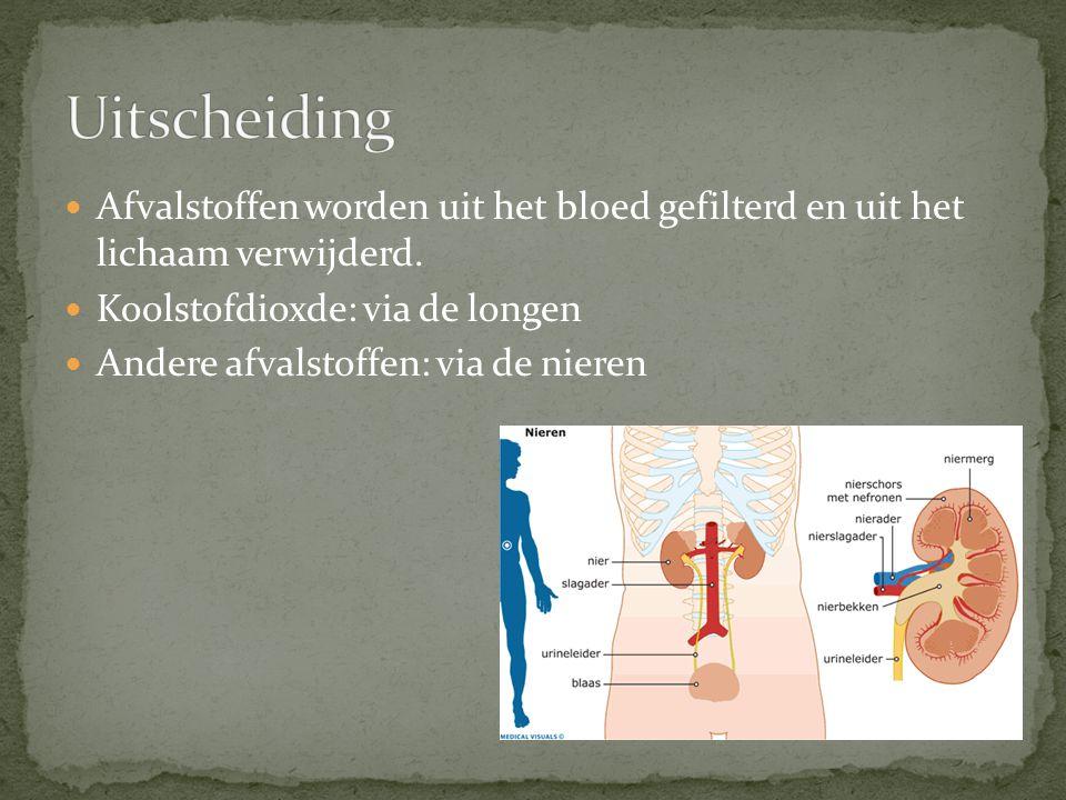Uitscheiding Afvalstoffen worden uit het bloed gefilterd en uit het lichaam verwijderd. Koolstofdioxde: via de longen.