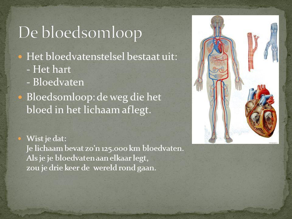 De bloedsomloop Het bloedvatenstelsel bestaat uit: - Het hart - Bloedvaten. Bloedsomloop: de weg die het bloed in het lichaam aflegt.