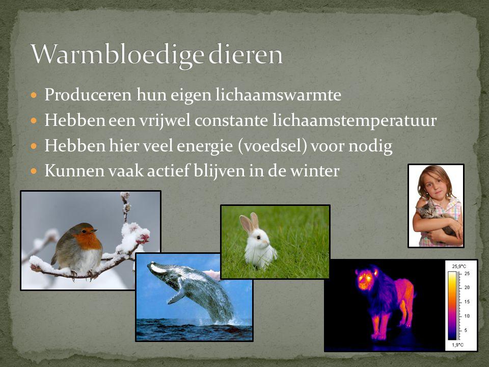 Warmbloedige dieren Produceren hun eigen lichaamswarmte
