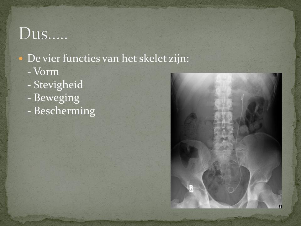 Dus….. De vier functies van het skelet zijn: - Vorm - Stevigheid - Beweging - Bescherming