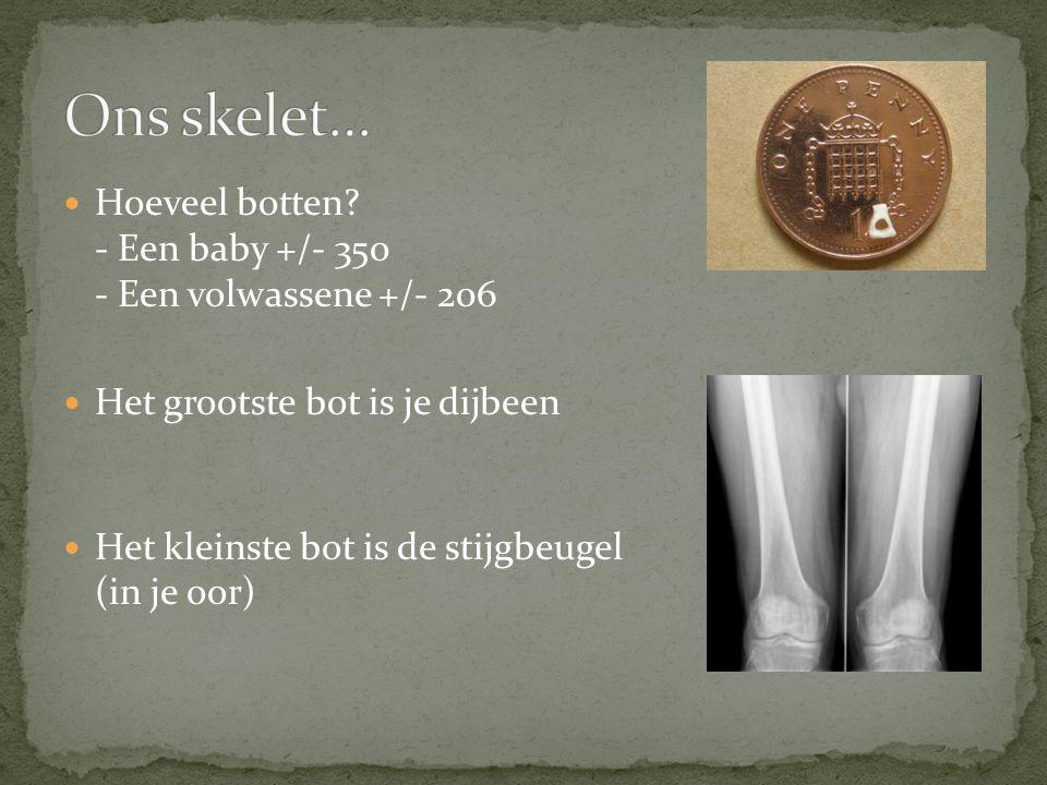 Ons skelet… Hoeveel botten - Een baby +/- 350 - Een volwassene +/- 206. Het grootste bot is je dijbeen.