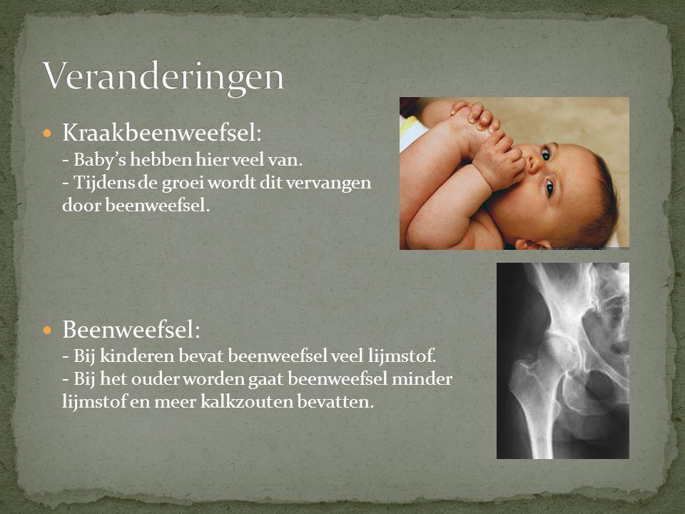 Veranderingen Kraakbeenweefsel: - Baby's hebben hier veel van. - Tijdens de groei wordt dit vervangen door beenweefsel.