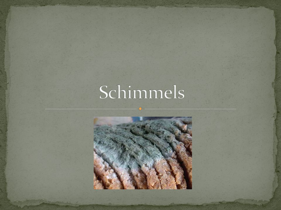 Schimmels