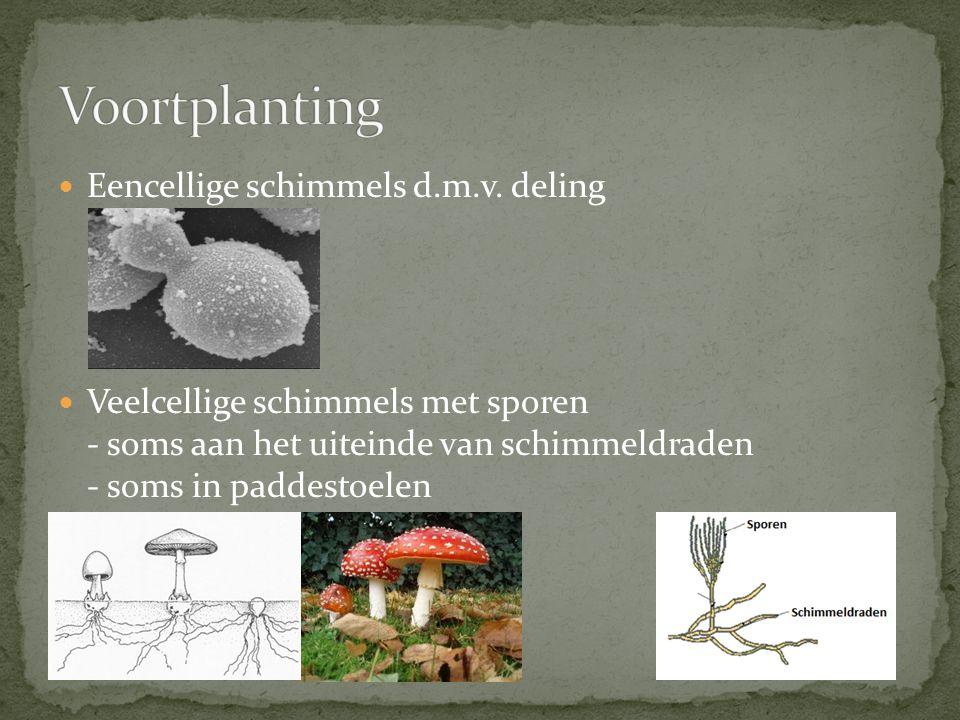 Voortplanting Eencellige schimmels d.m.v. deling