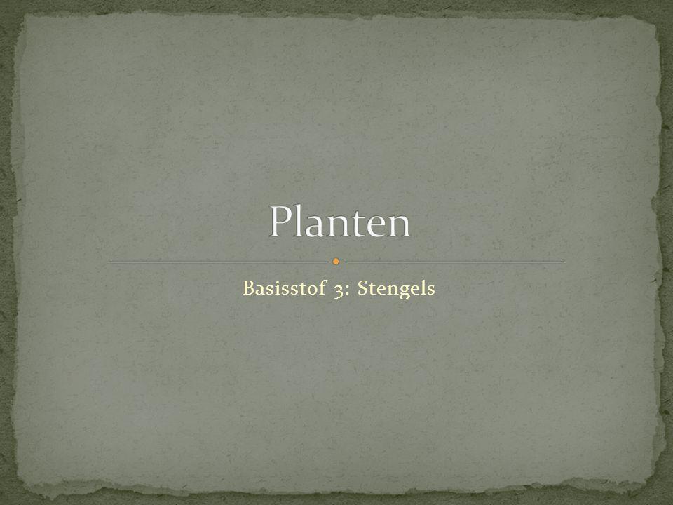 Planten Basisstof 3: Stengels
