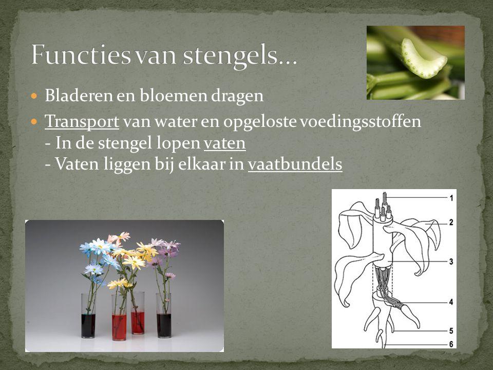 Functies van stengels…