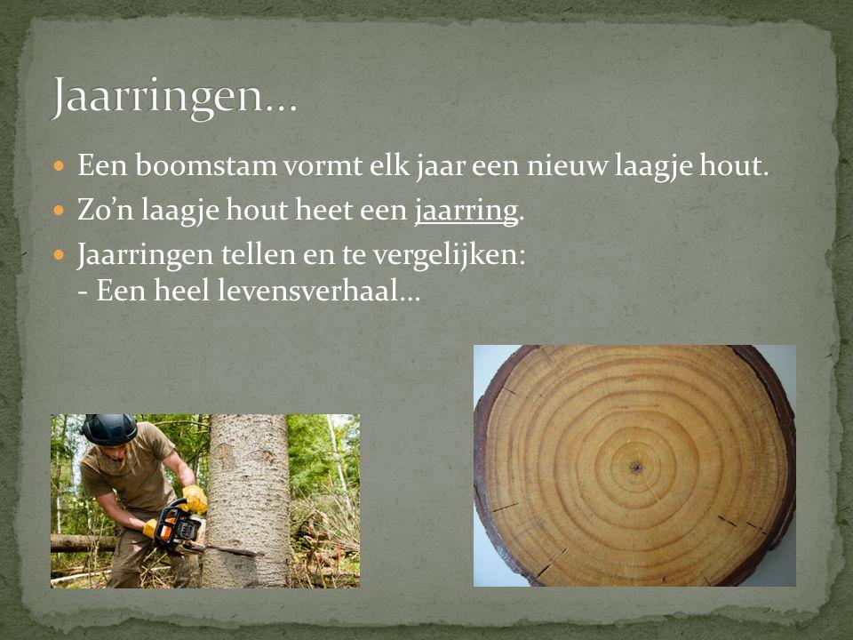 Jaarringen… Een boomstam vormt elk jaar een nieuw laagje hout.