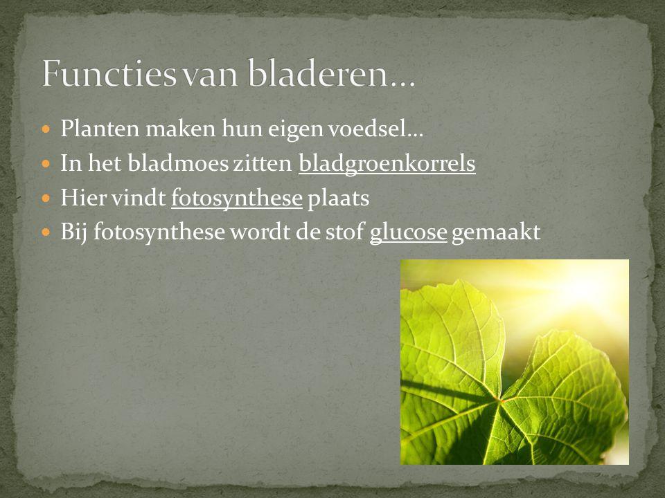 Functies van bladeren…