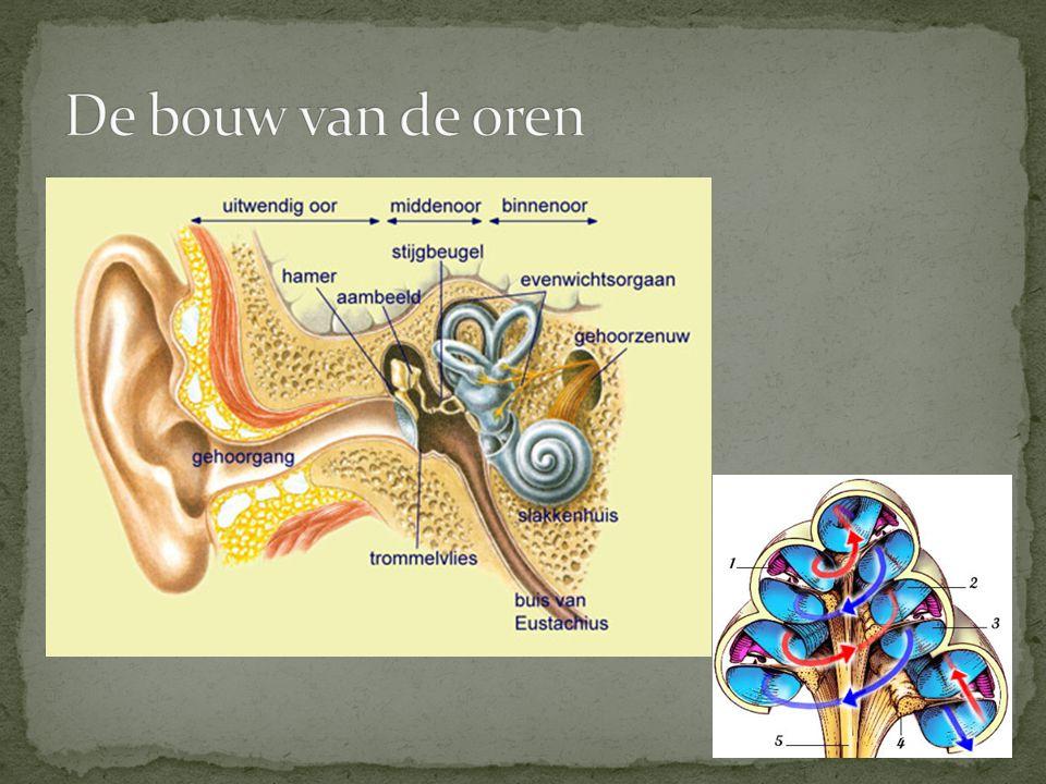 De bouw van de oren
