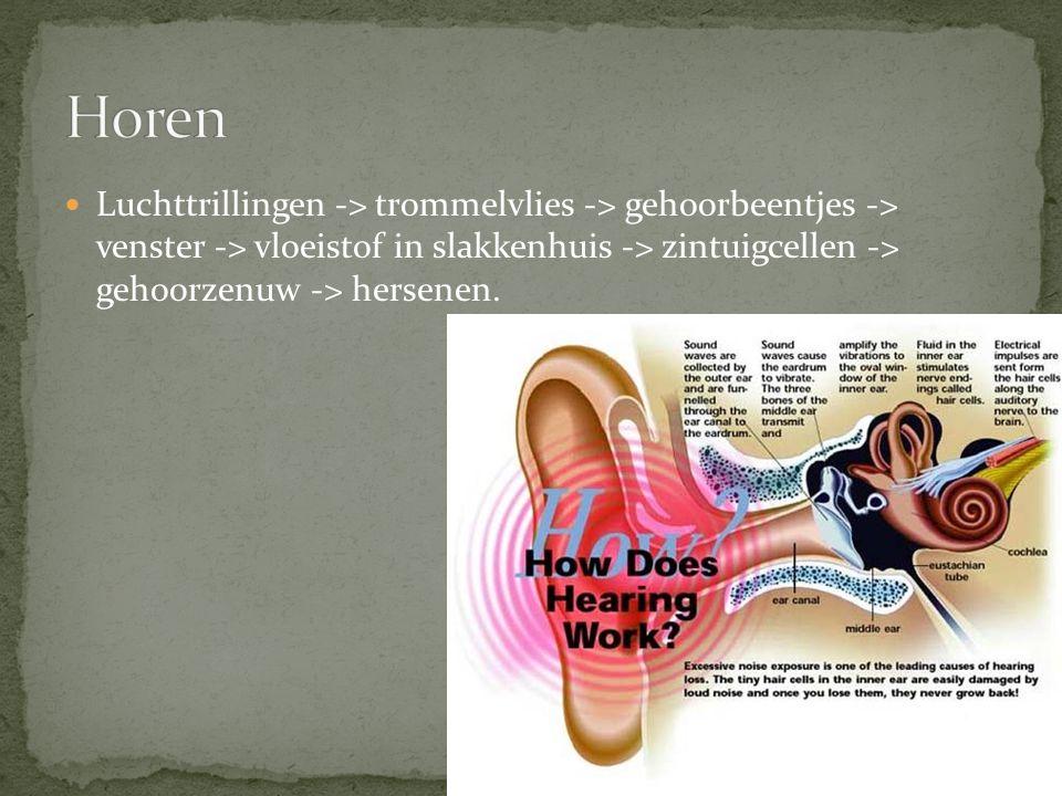Horen Luchttrillingen -> trommelvlies -> gehoorbeentjes -> venster -> vloeistof in slakkenhuis -> zintuigcellen -> gehoorzenuw -> hersenen.