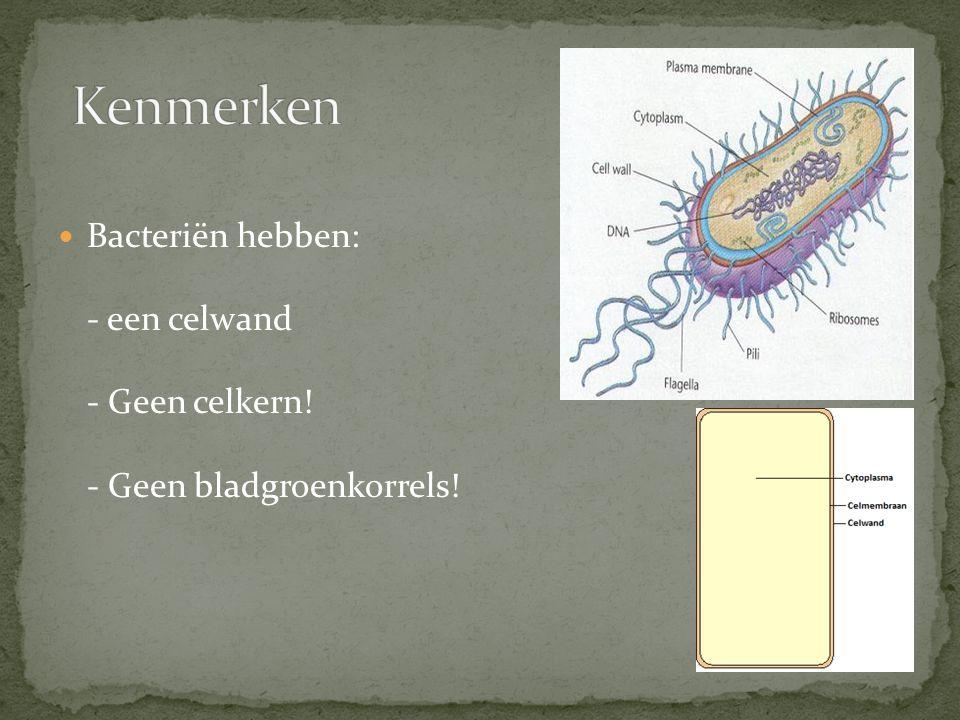 Kenmerken Bacteriën hebben: - een celwand - Geen celkern! - Geen bladgroenkorrels!