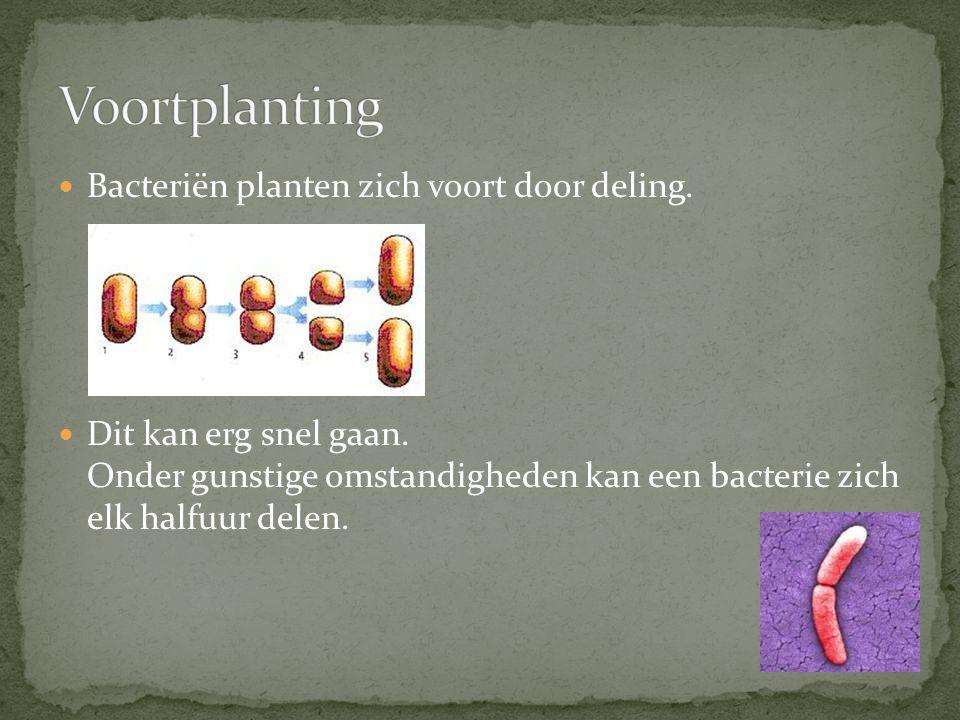 Voortplanting Bacteriën planten zich voort door deling.