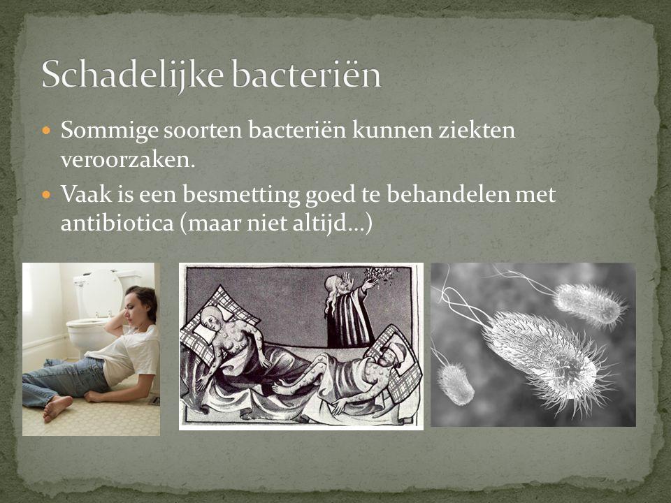 Schadelijke bacteriën