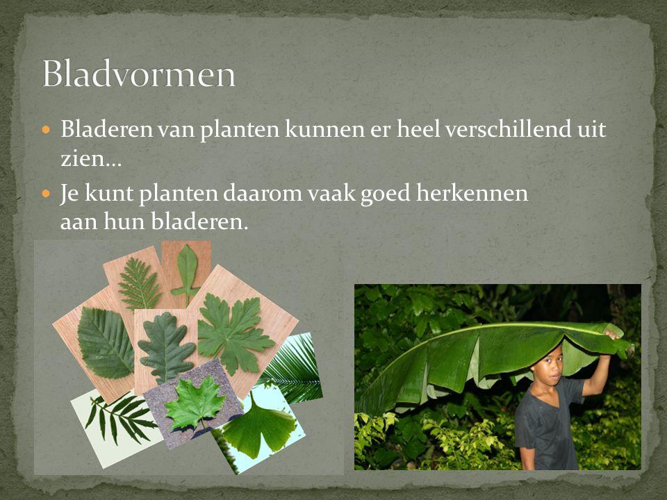 Bladvormen Bladeren van planten kunnen er heel verschillend uit zien…