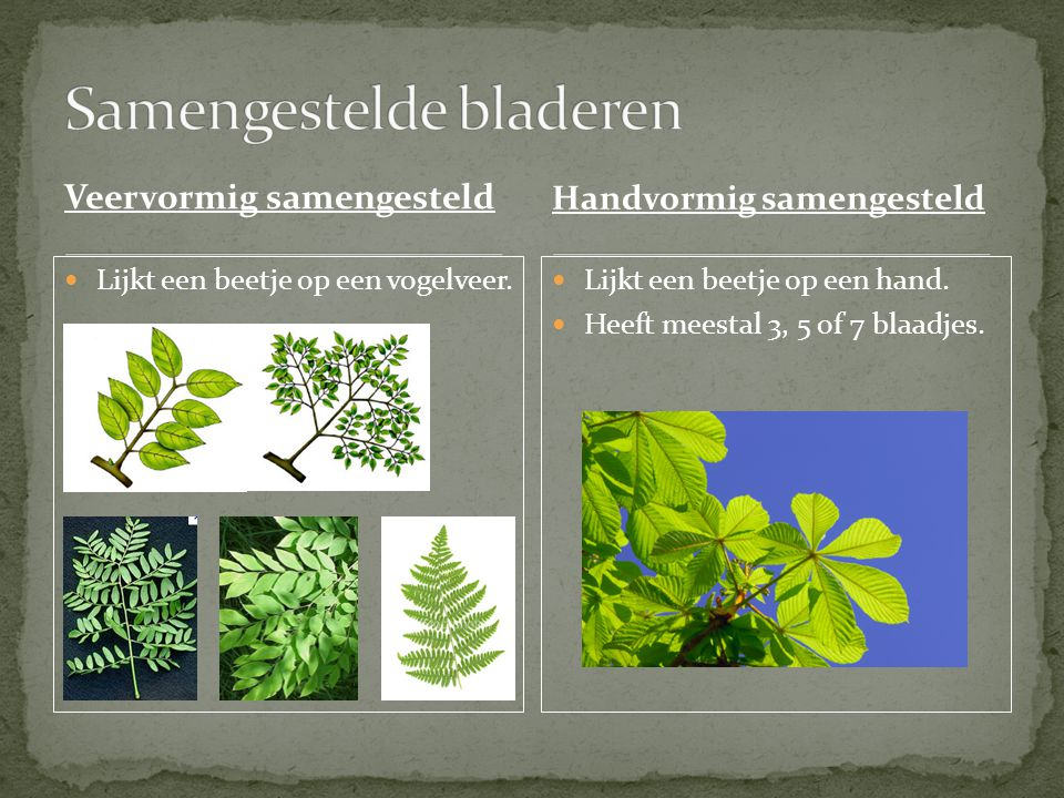 Samengestelde bladeren